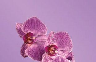 Moda 20147 Color Orquidea